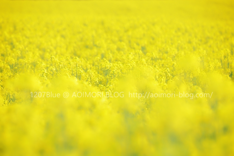 5D4_1467p_2005_PS19.jpg