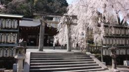 2020-sakura-oishijinja3.jpg
