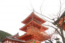 deji1-2020-koyo-kiyomizudera2.jpg
