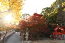 deji1-2020-koyo-sumadera1.jpg