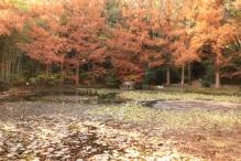 deji1-2020-koyo-sumarikyupark1.jpg