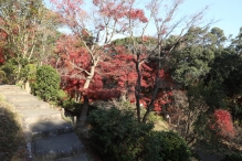 deji1-2020-koyo-sumarikyupark6.jpg