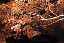 deji1-2020-night-koyo-hogonin11.jpg