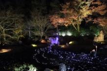 deji1-2020-night-koyo-hogonin3.jpg