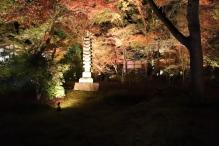 deji1-2020-night-koyo-hogonin5.jpg