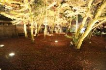 deji1-2020-night-koyo-hogonin9.jpg