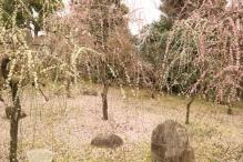 deji1-2021-ume-jonangu2.jpg