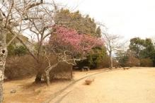 deji1-2021-ume-kameyamapark1.jpg