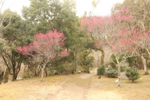 deji1-2021-ume-kameyamapark3.jpg