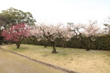 deji1-2021-ume-nagoyajo2.jpg