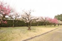 deji1-2021-ume-nagoyajo4.jpg