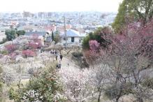 deji1-2021-ume-okamotopark1.jpg