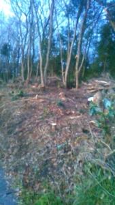 200319 雑木林