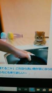 200525 食器洗いをねこが