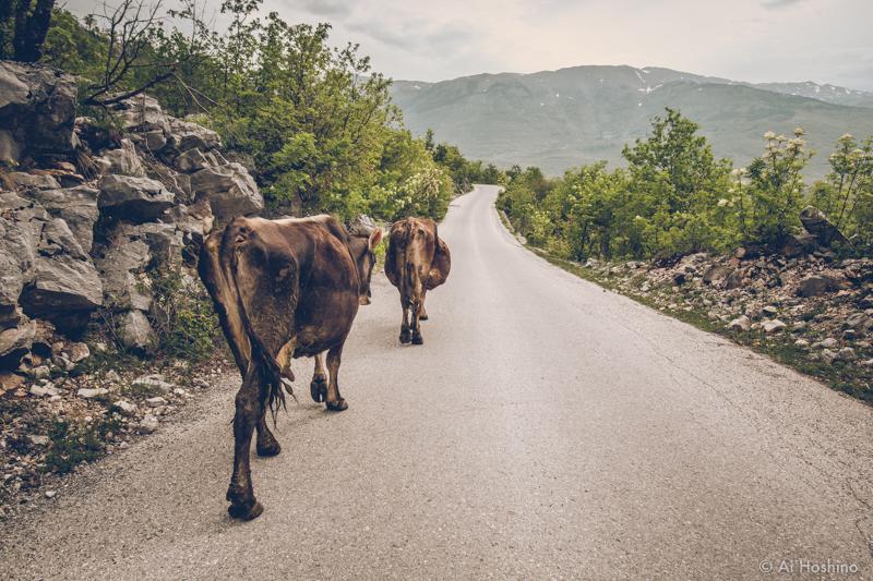 20210130_Montenegro-5.jpg