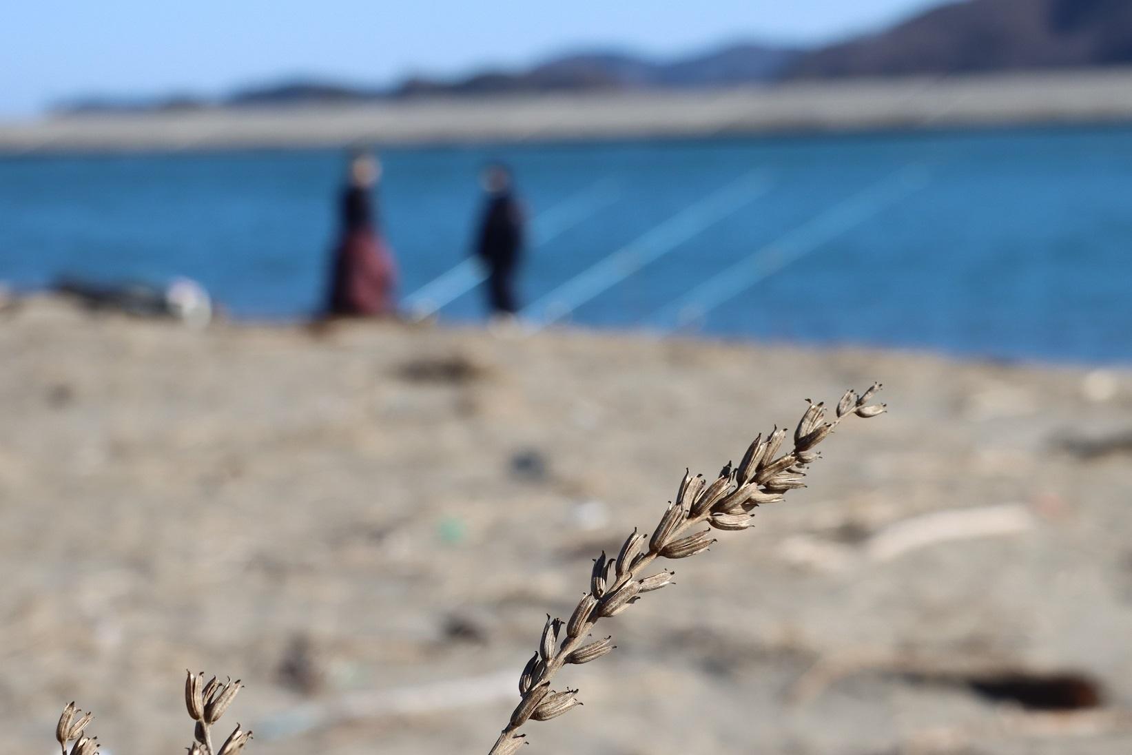 北上川河口の砂浜1