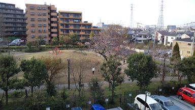 3/23 裏の公園の桜