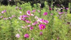 10/24 色々な花たち くりはま花の国