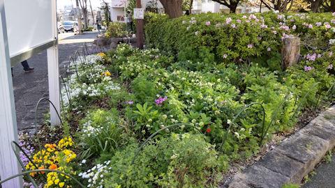 4/10 桜の散歩道 花壇