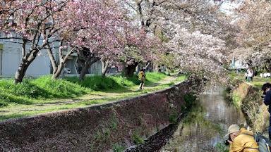 4/3 千本桜