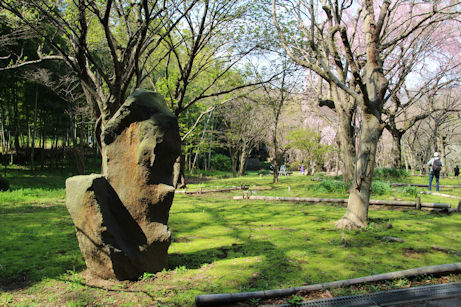 3/27 荒井城址公園の竹林