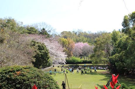 3/27 荒井城址公園の広場 太極拳