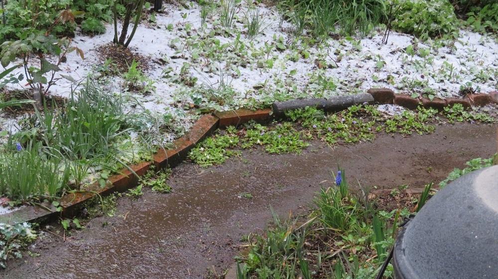 1庭の雪IMG_0002
