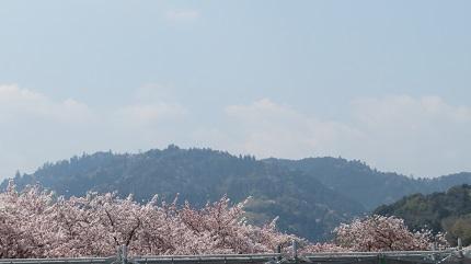 4高尾山IMG_6244
