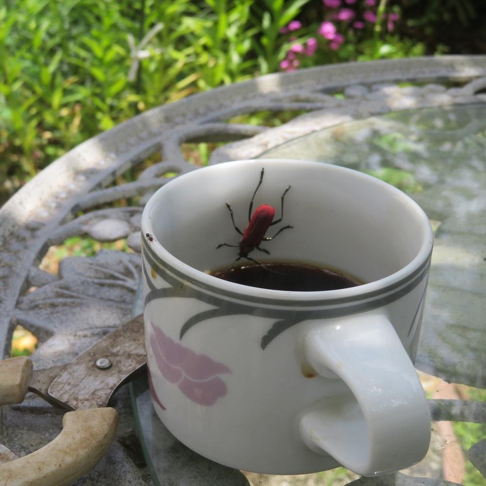 2虫と蟻IMG_6531