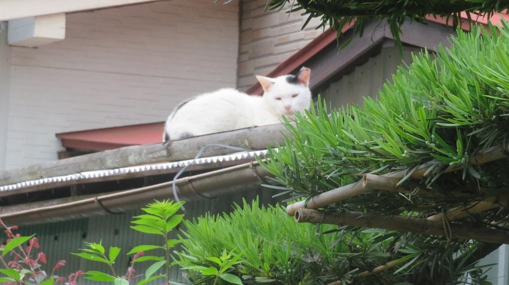 1猫IMG_6535