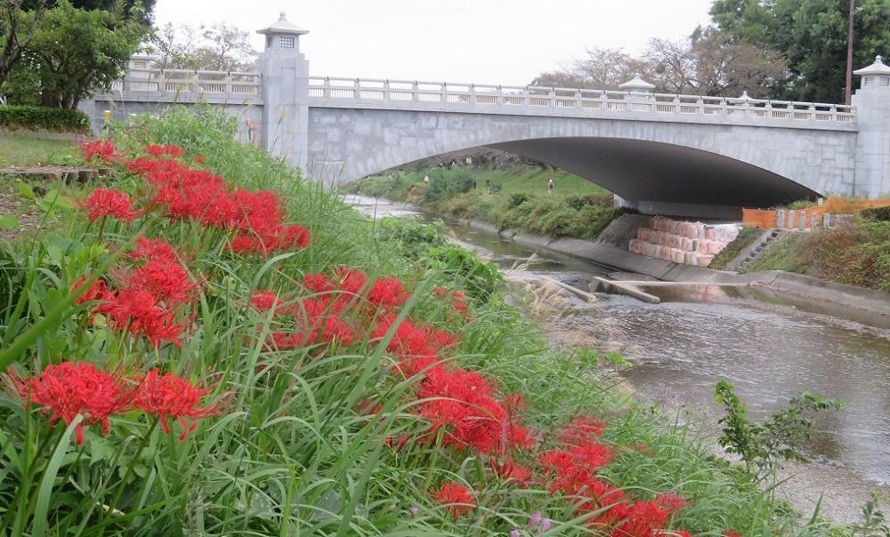 1橋とヒガンバナIMG_6903 - コピー