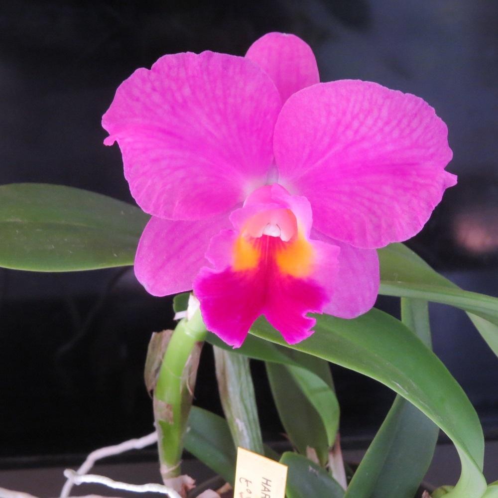 1花も大きくIMG_6542