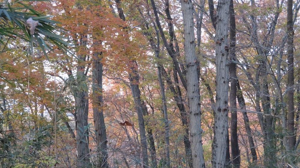 12月の林IMG_7158