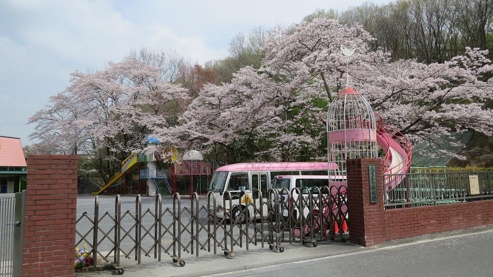 3園庭の桜IMG_6796