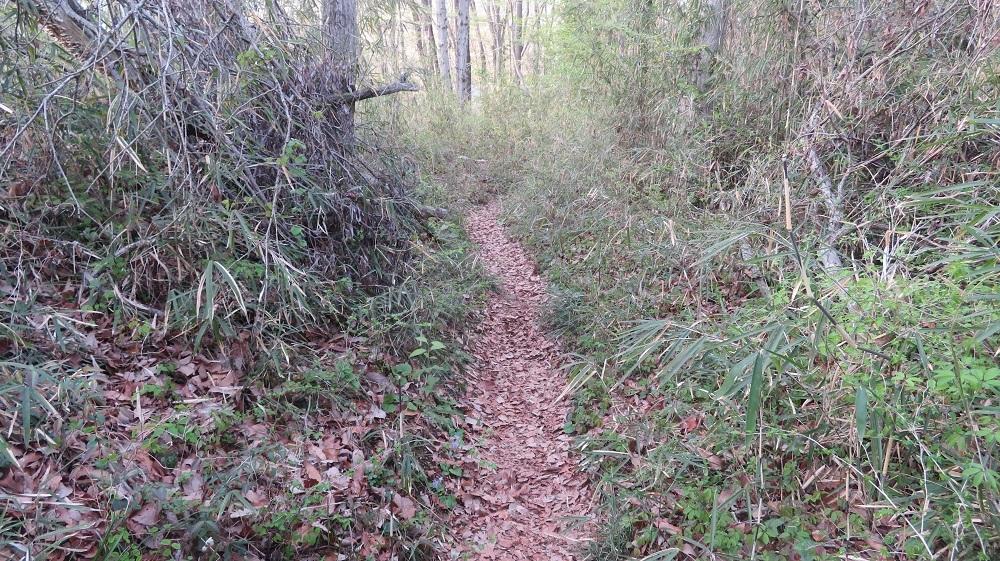 1林の小道IMG_7588