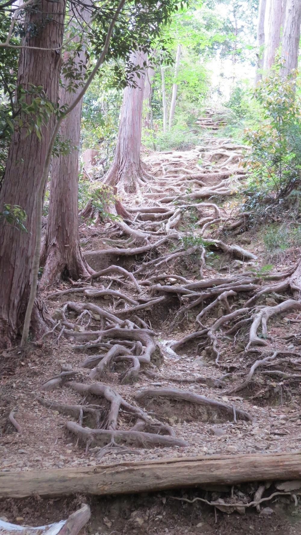 10木の根IMG_7043