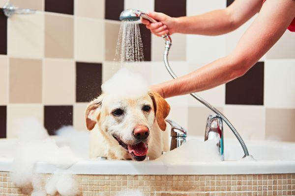 dog-taking-a-bath-PLAUJAC.jpg