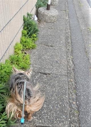 20210427 散歩8-4強風