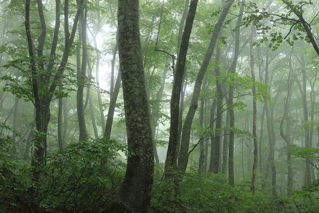 ブナの森2