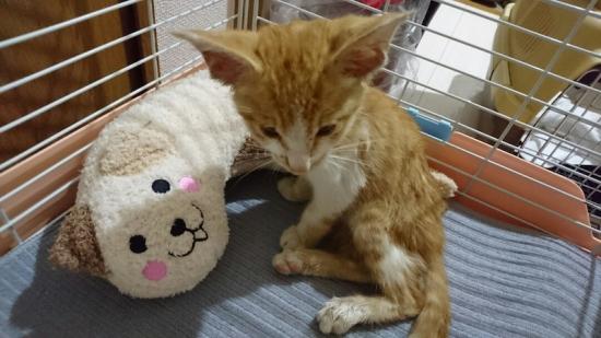 子猫 猫 砂 食べる