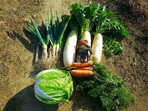 野菜 2021 1 10-1