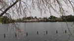 大学近くの池