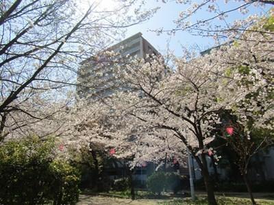 2020桜1