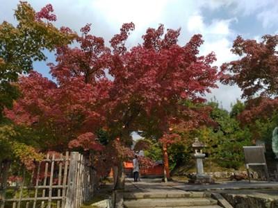 s-嵐山3
