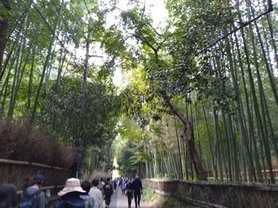 s-嵐山4