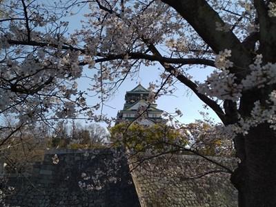 s-2021大阪城さくら1