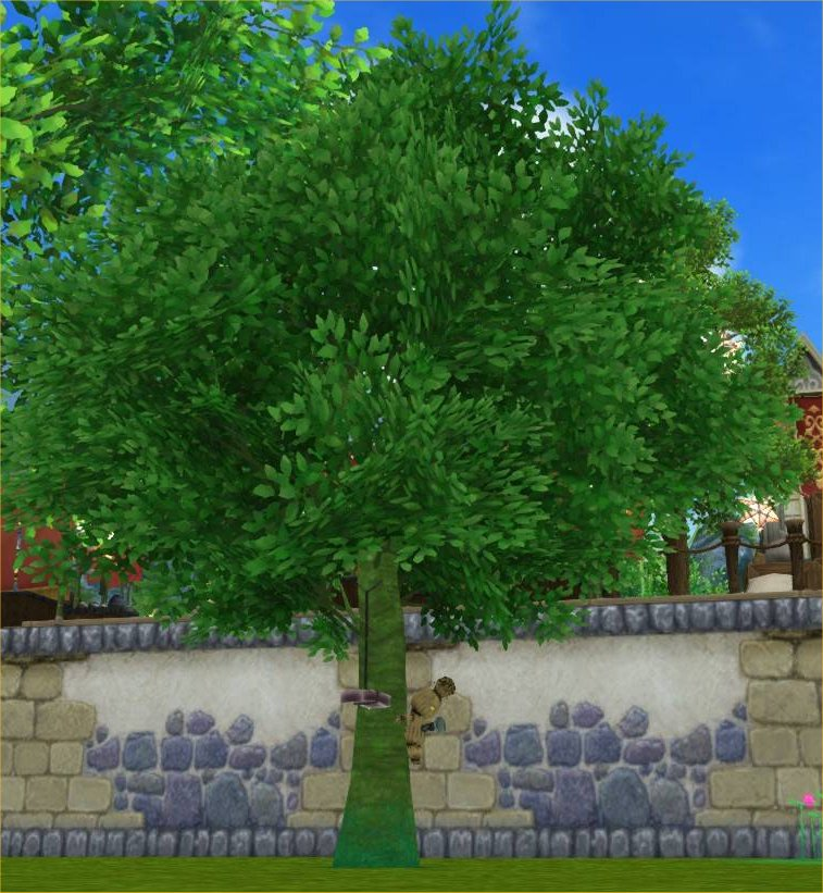 20200701あやかしの木