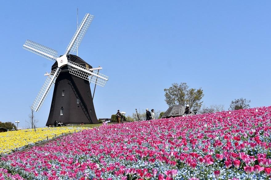風車の丘4月 (0)