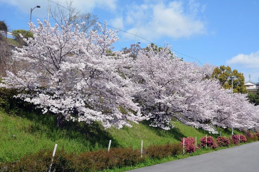 道の駅・桜 (0)