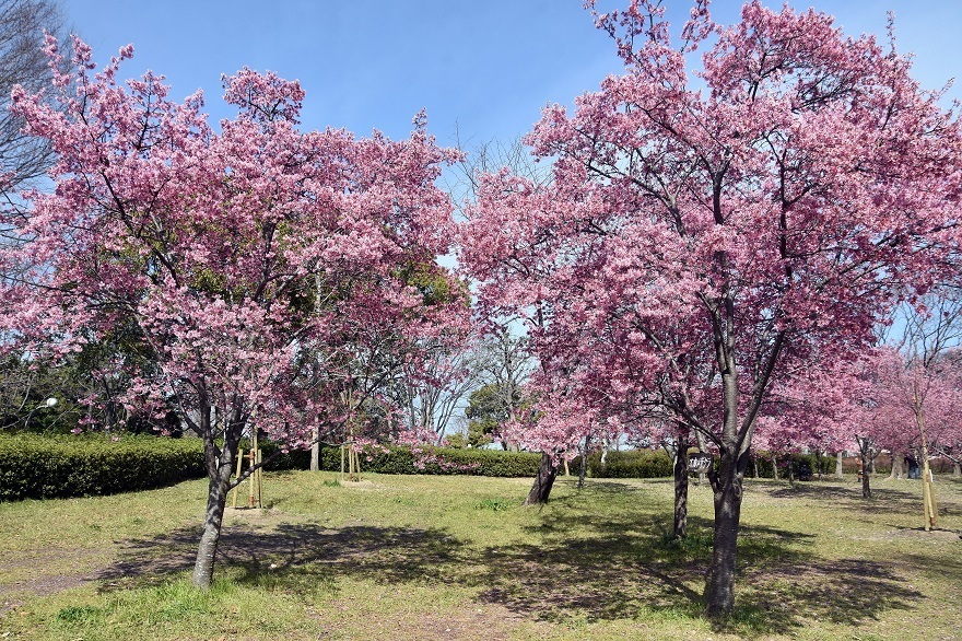 神戸ワールド・サンバソウ#1 (72)